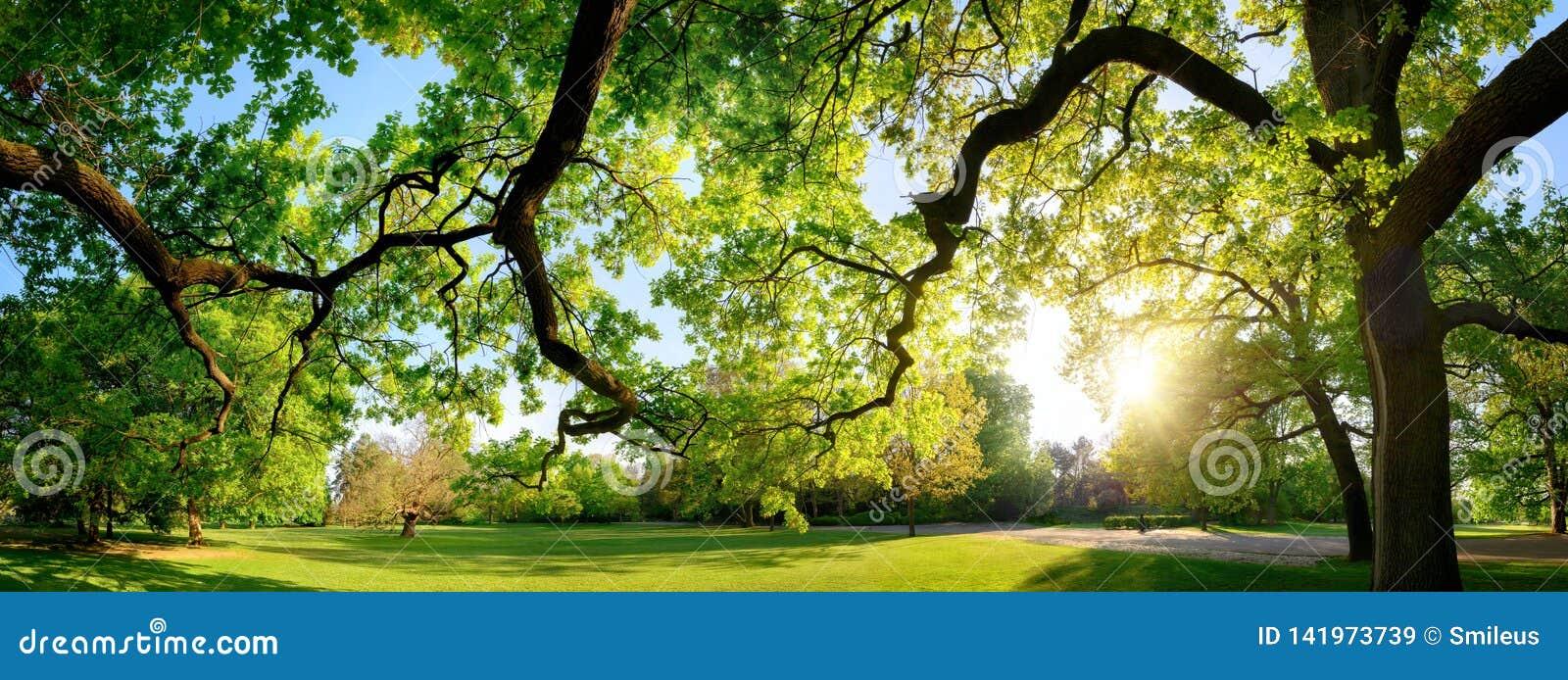 Paisaje panorámico tranquilo en un parque hermoso
