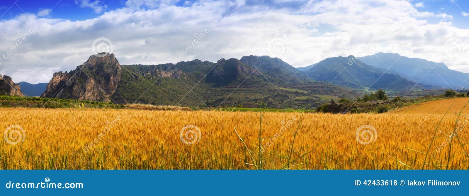 Paisaje rural con el campo de trigo