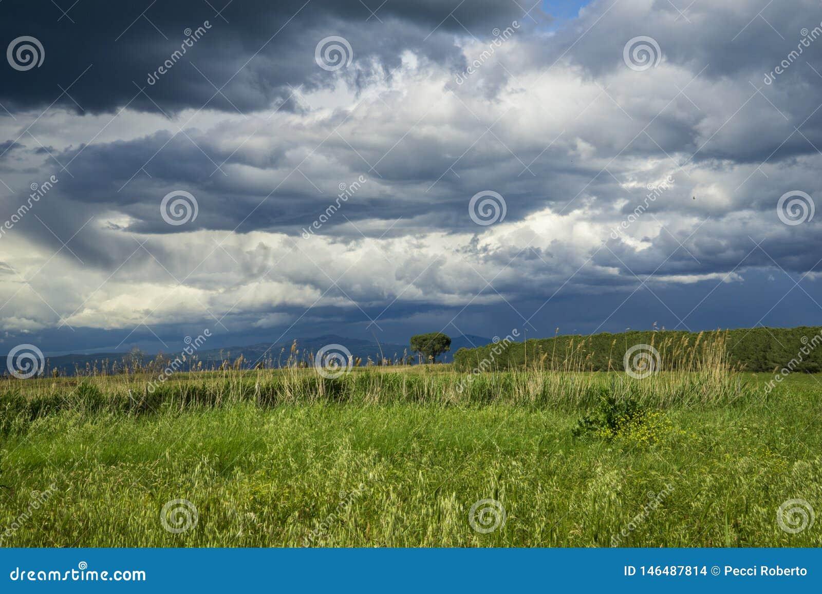Paisaje rural de Italia Toscana Grosseto Maremma en la floraci?n, campos de la rabina en colinas de florecimiento y bosque del pi