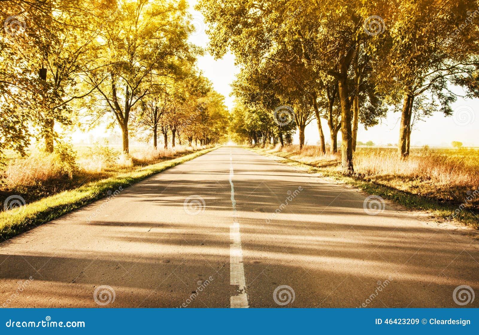 Paisaje rural del otoño con los árboles de la carretera nacional y del oro adelante