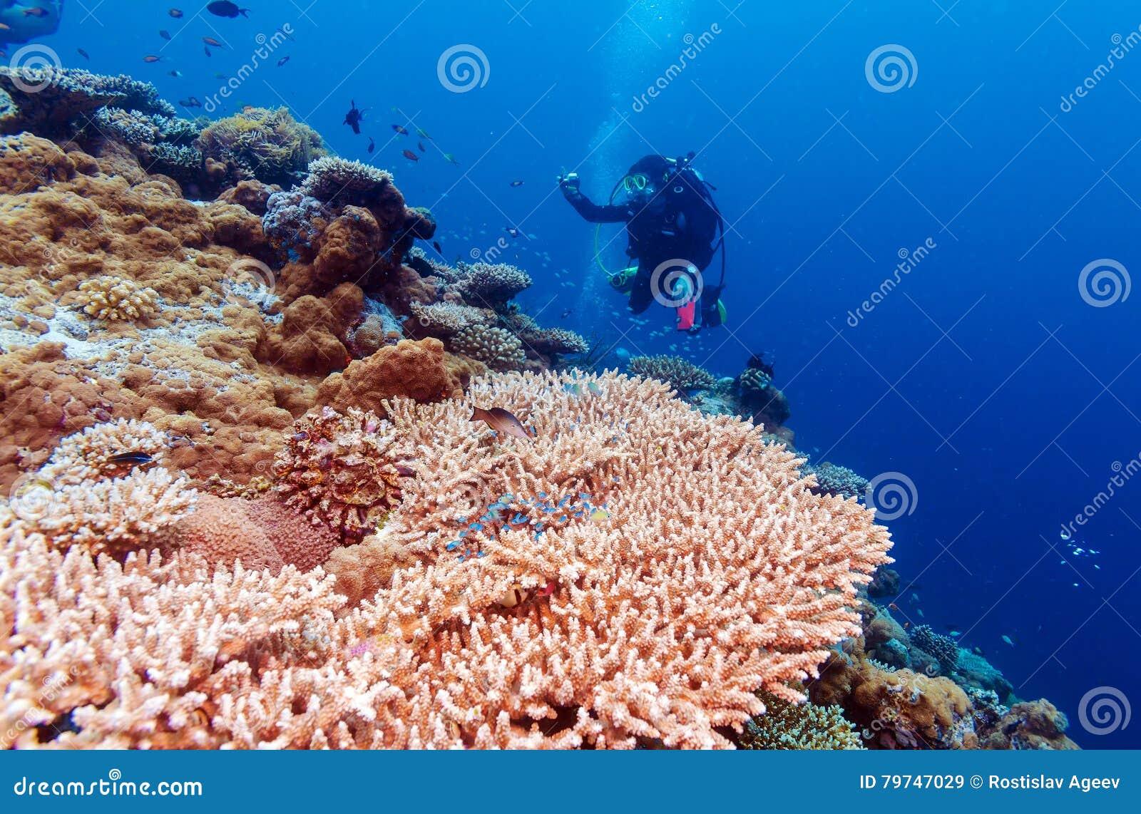 Paisaje subacuático con centenares de pescados