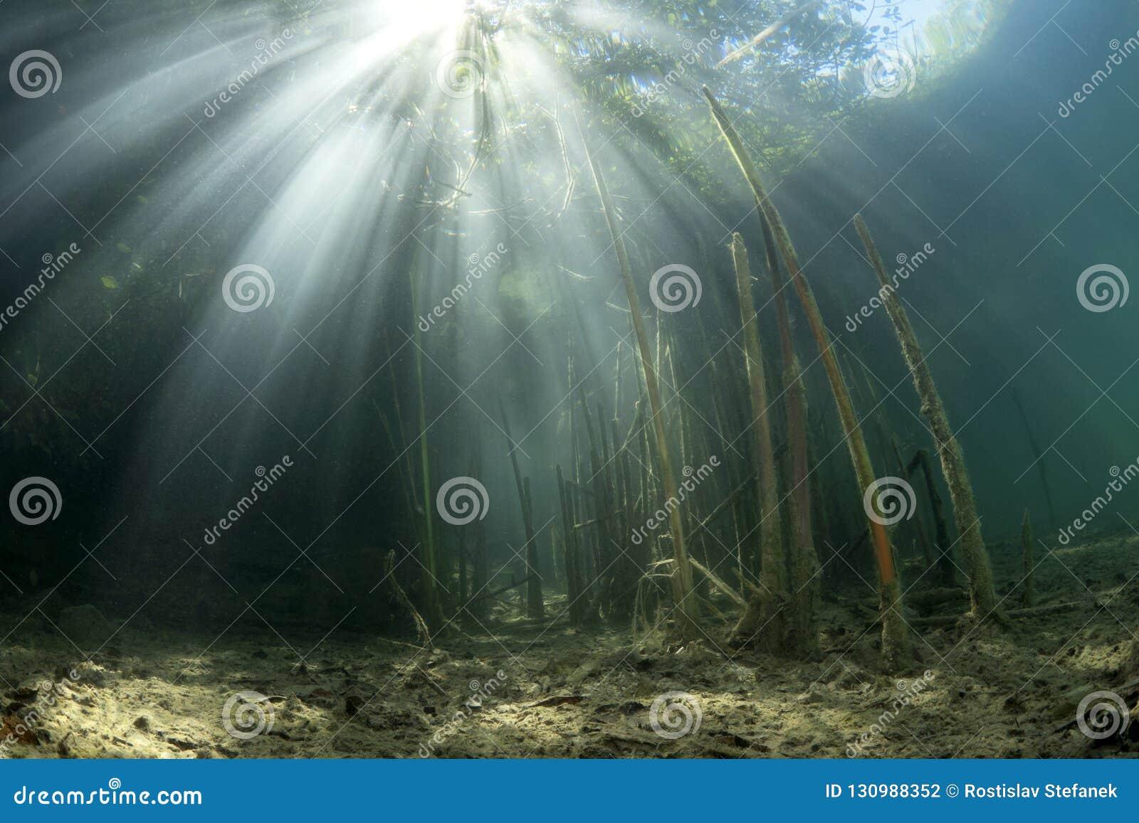 Paisaje subacuático con Typha de lámina