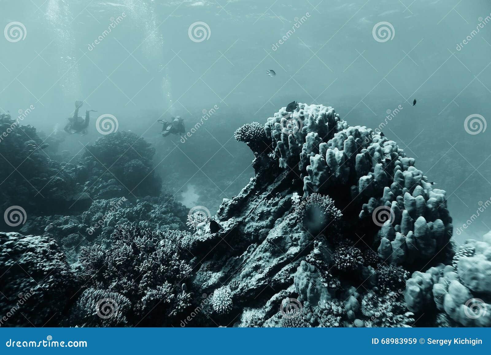 Paisaje subacuático de los buceadores
