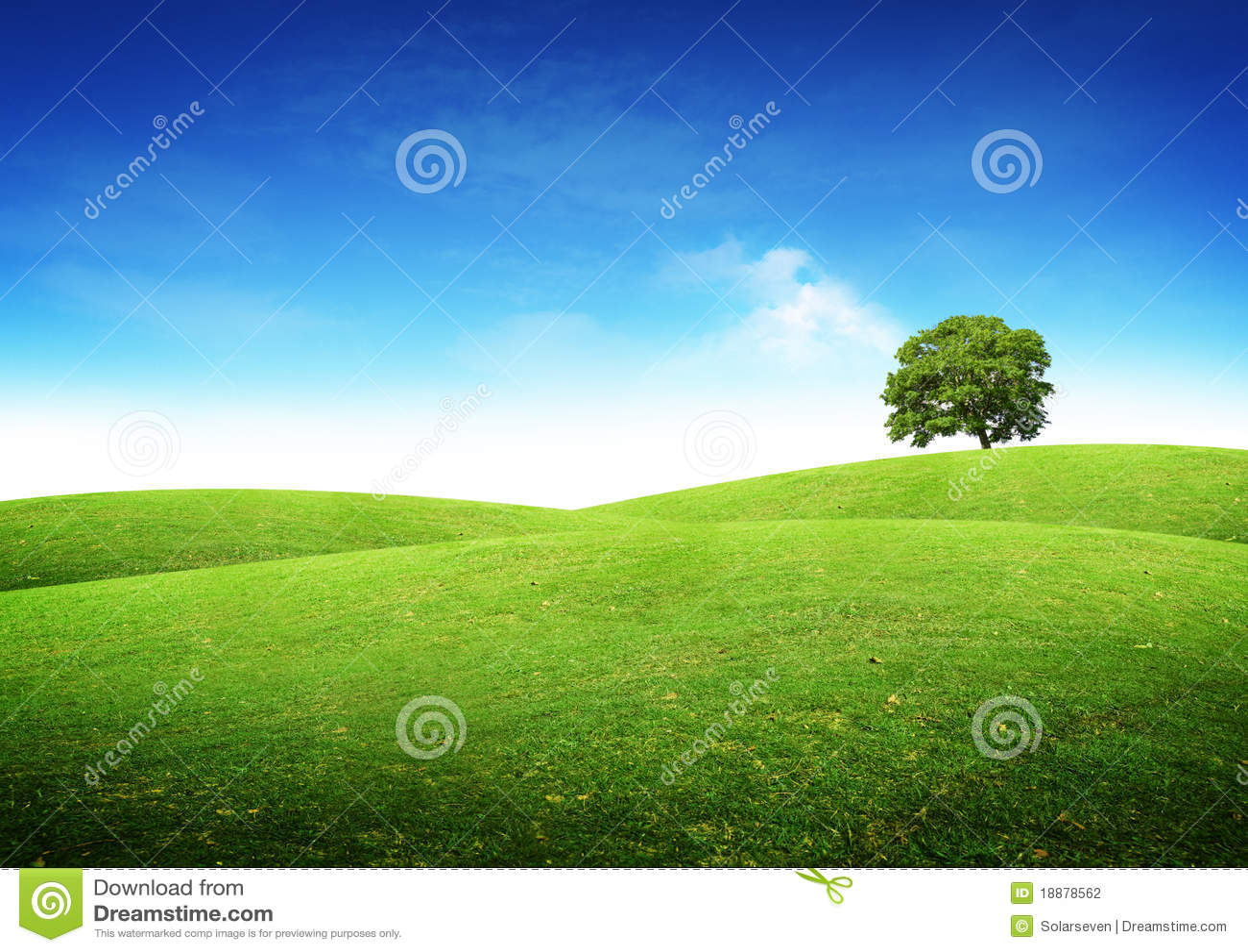 Paisaje verde del verano