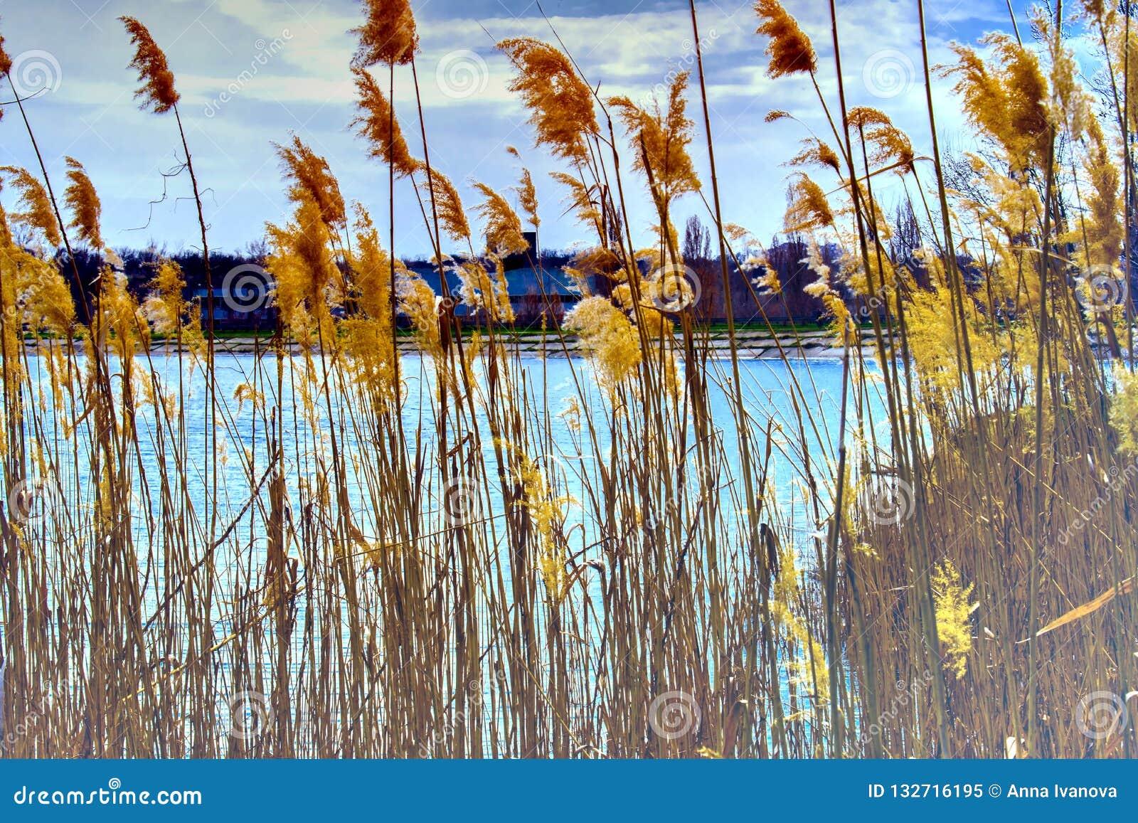 Paisajes hermosos de Rusia Región de Rostov Lugares coloridos Vegetación y ríos verdes con los lagos y los pantanos Bosques y mea
