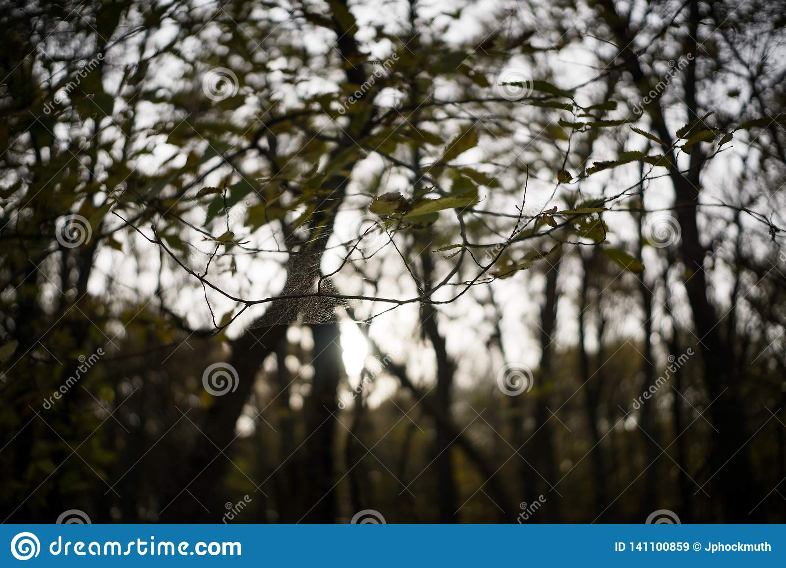 Pająk sieć Zawiesza Między Dwa drzewami w dowcipnisia parku, Iowa