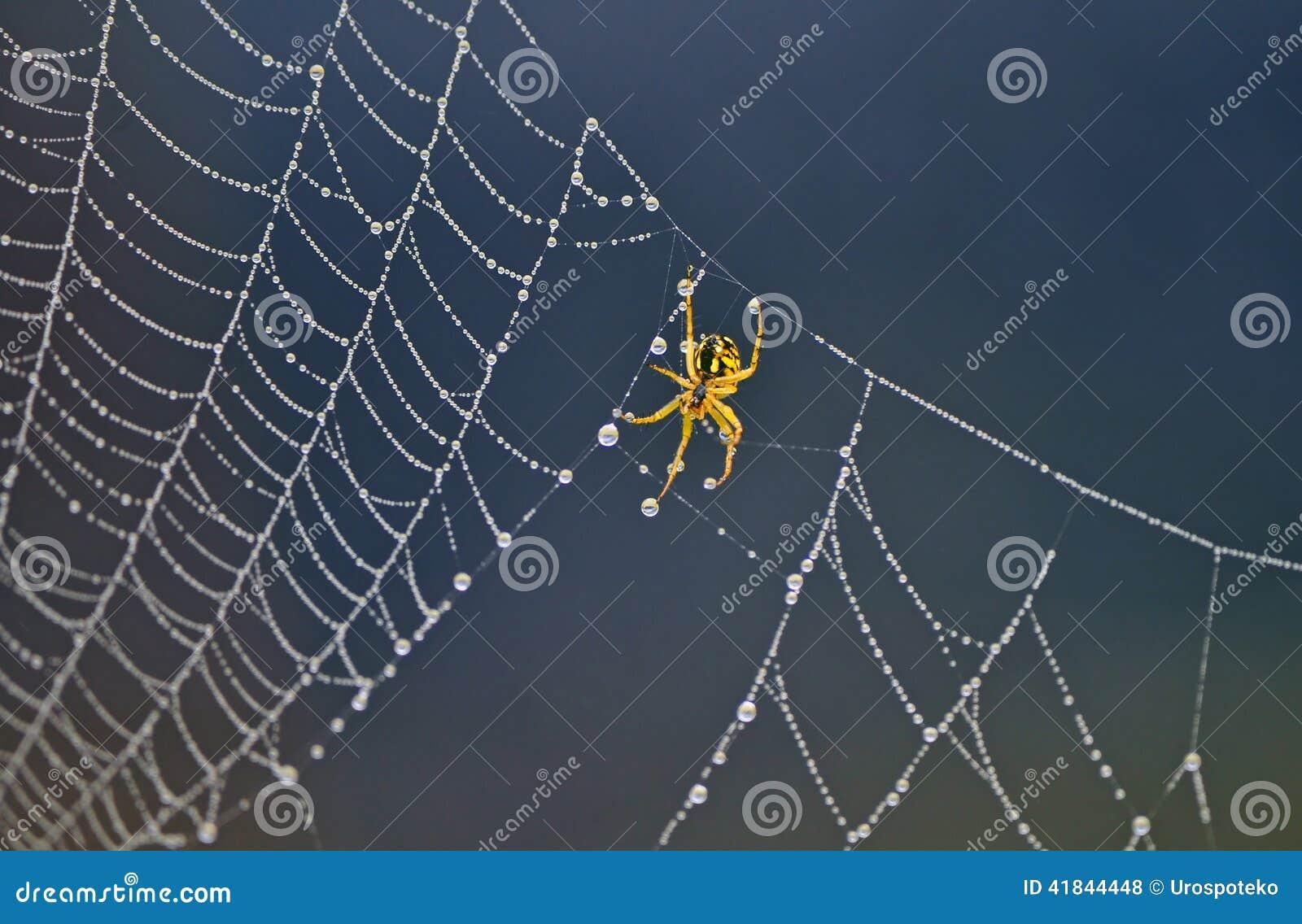 Pająk na pająk sieci