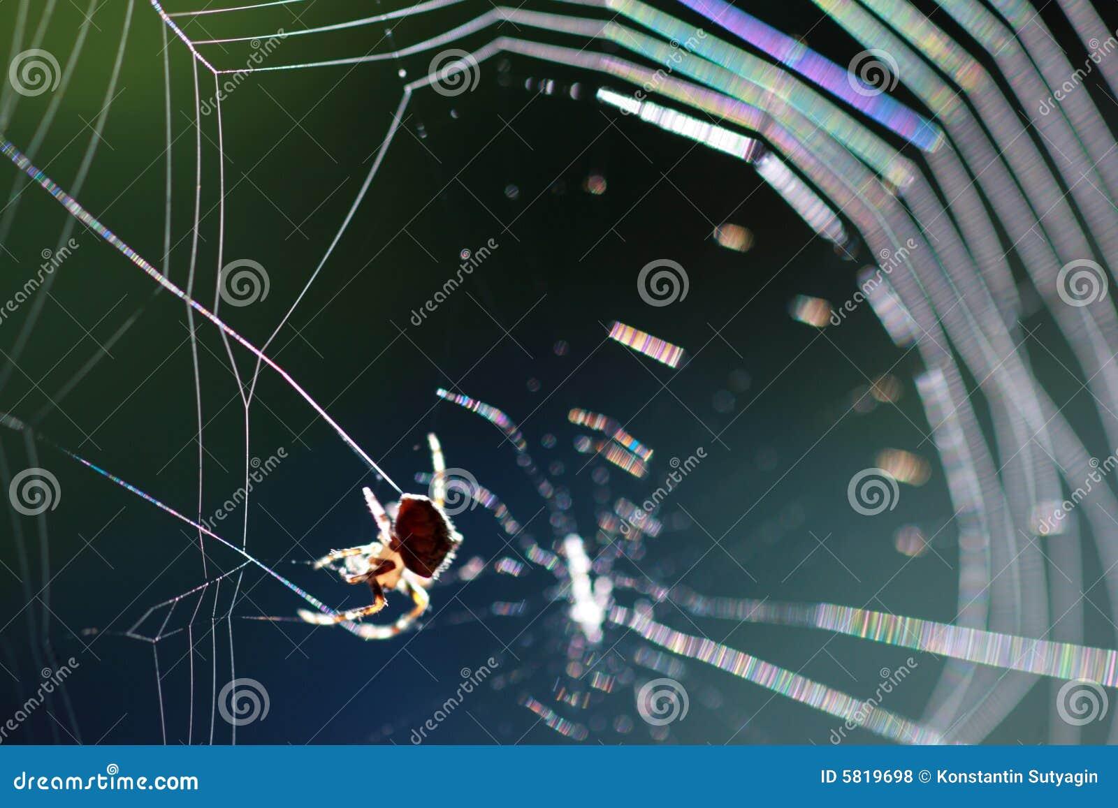Pająk pajęczynę