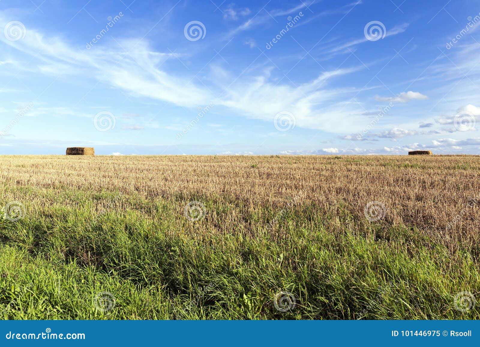 Paja después de la cosecha
