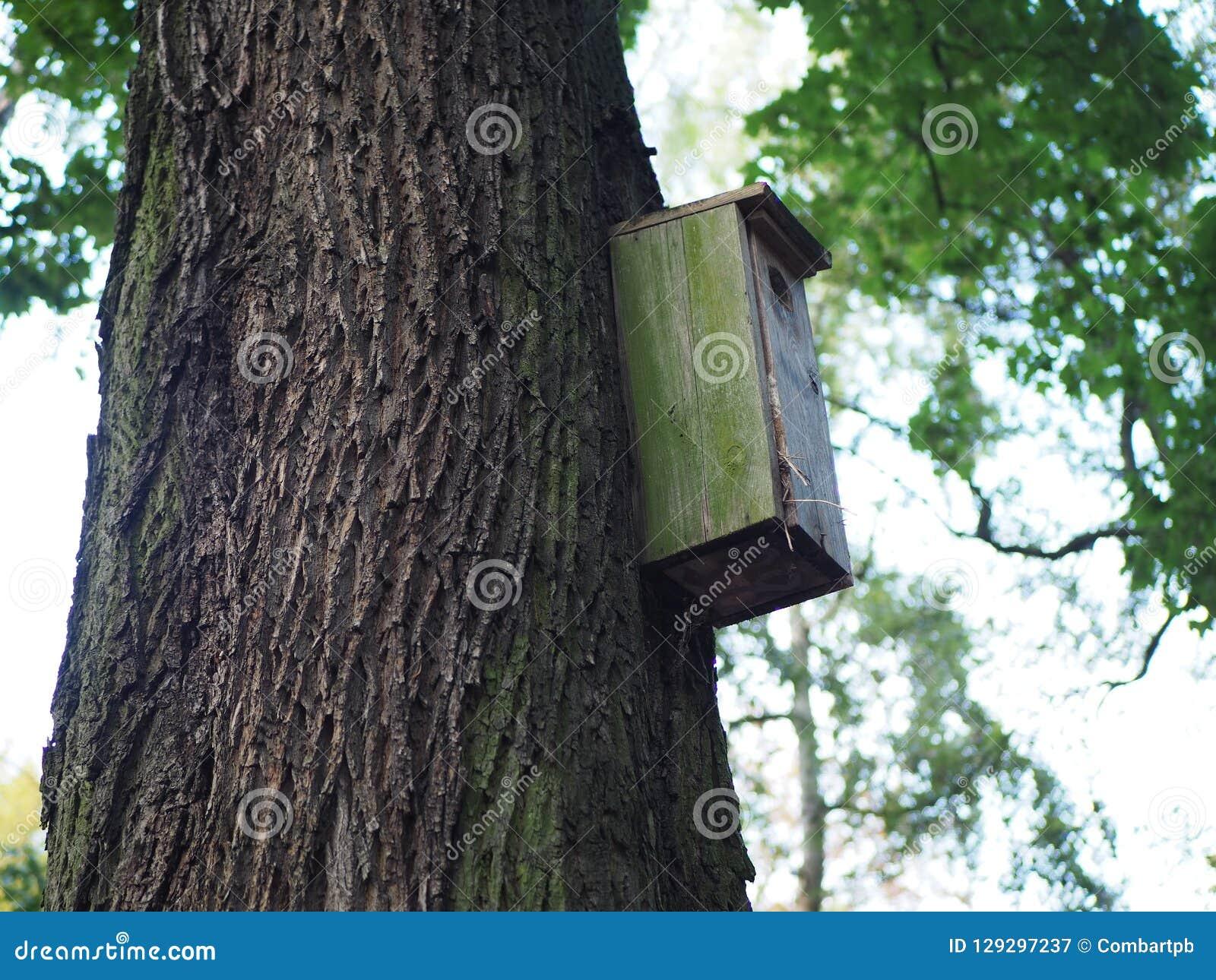 Pajarera, alimentador de madera del pájaro en un árbol para los pájaros