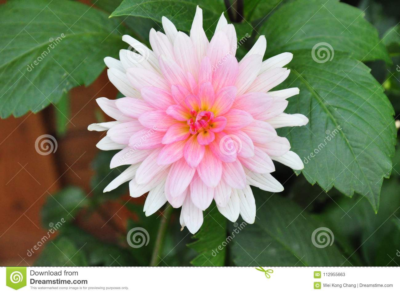Pale pink flowers at hong kong flower exhibition stock image image download pale pink flowers at hong kong flower exhibition stock image image of exhibition mightylinksfo