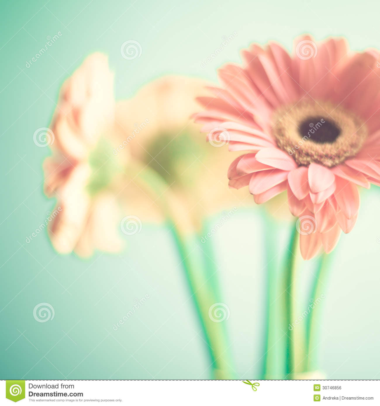 Pale Pink Flowers Stock Photo Image Of Ragged Mother 30746856