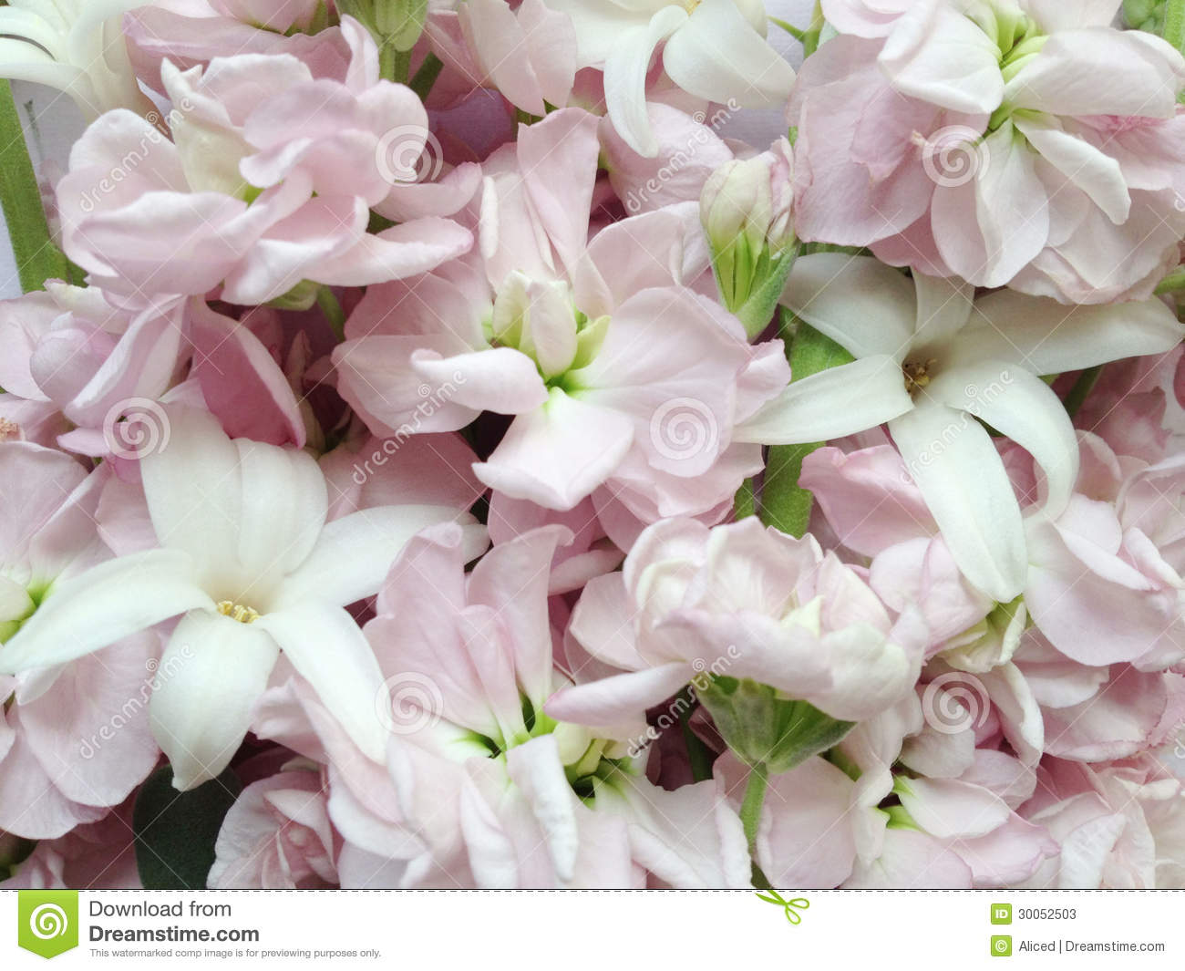 Pastel Spring Flowers Close Up Stock s Image
