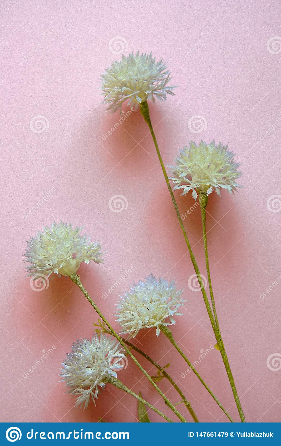 Pale purple wild flowers against pastel pink background. Flat lay