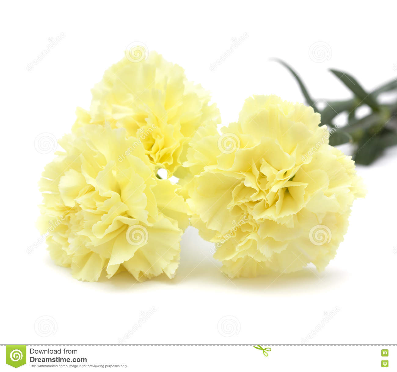 Light Yellow Flowers Images Flower Decoration Ideas