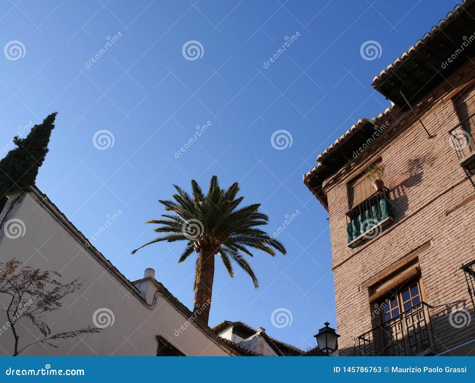 Paleis met bakstenen muren en palm