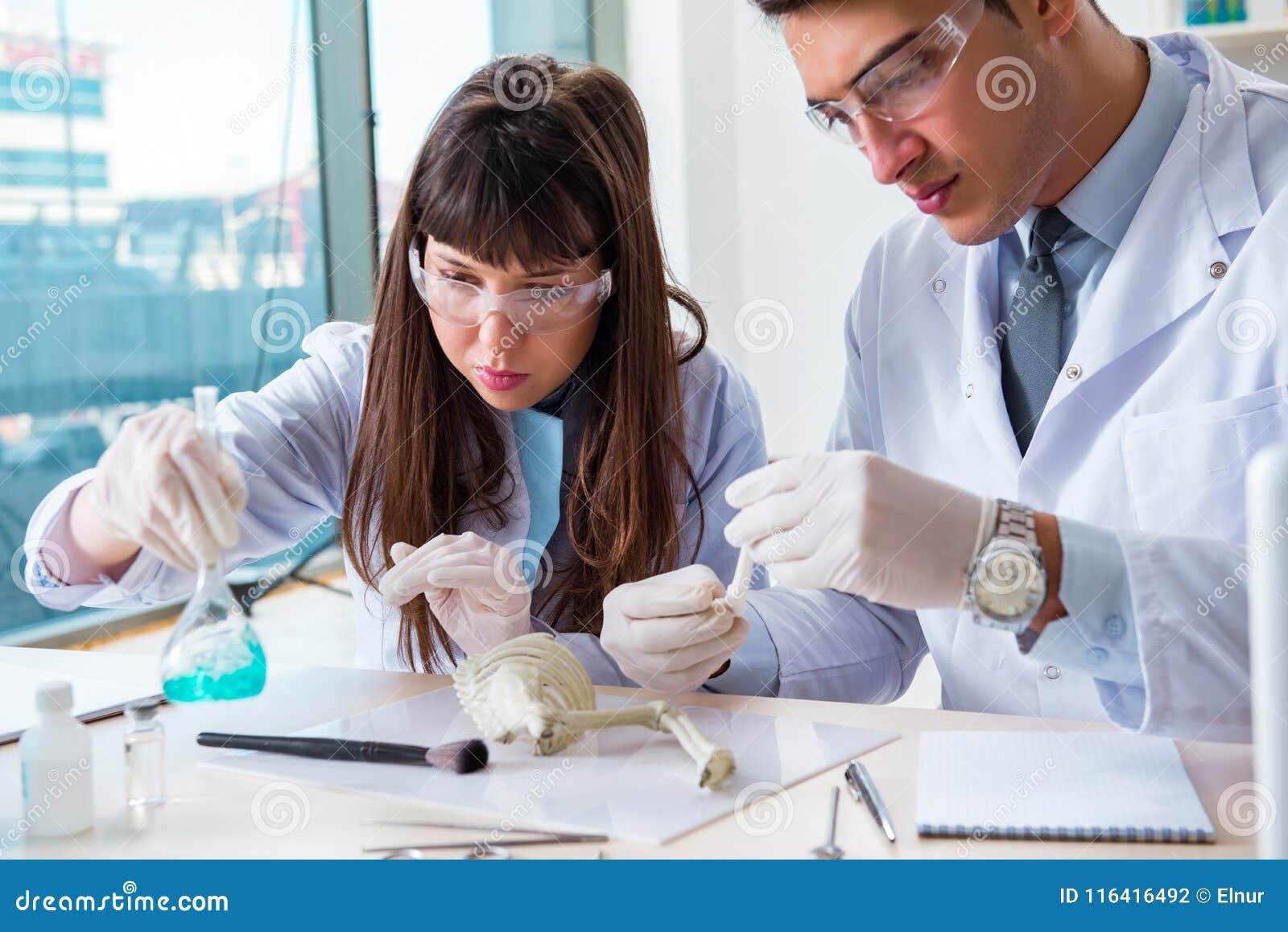 The paleontologists looking at bones of extinct animals