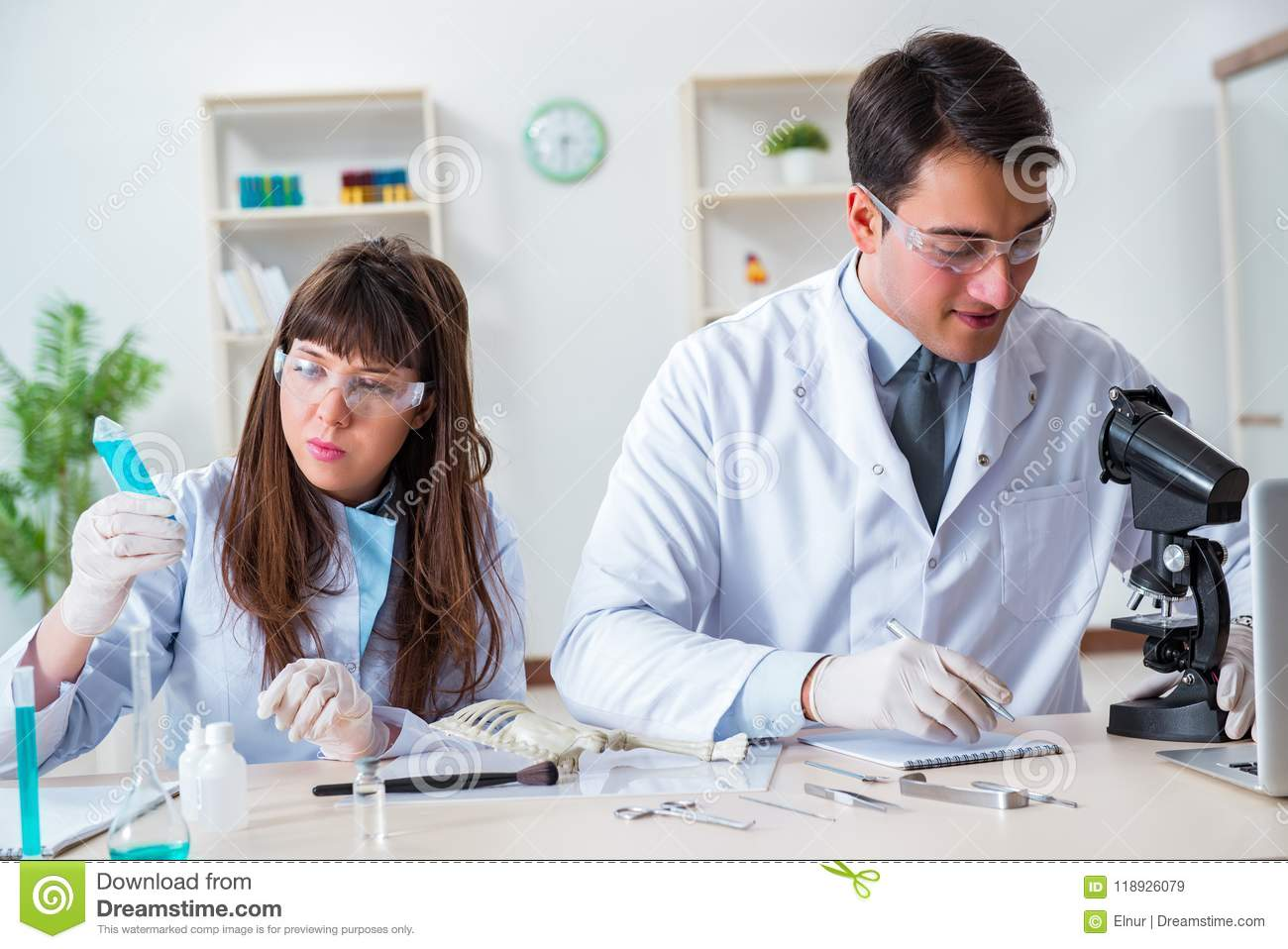 The paleontologists looking at bones of extinct animals