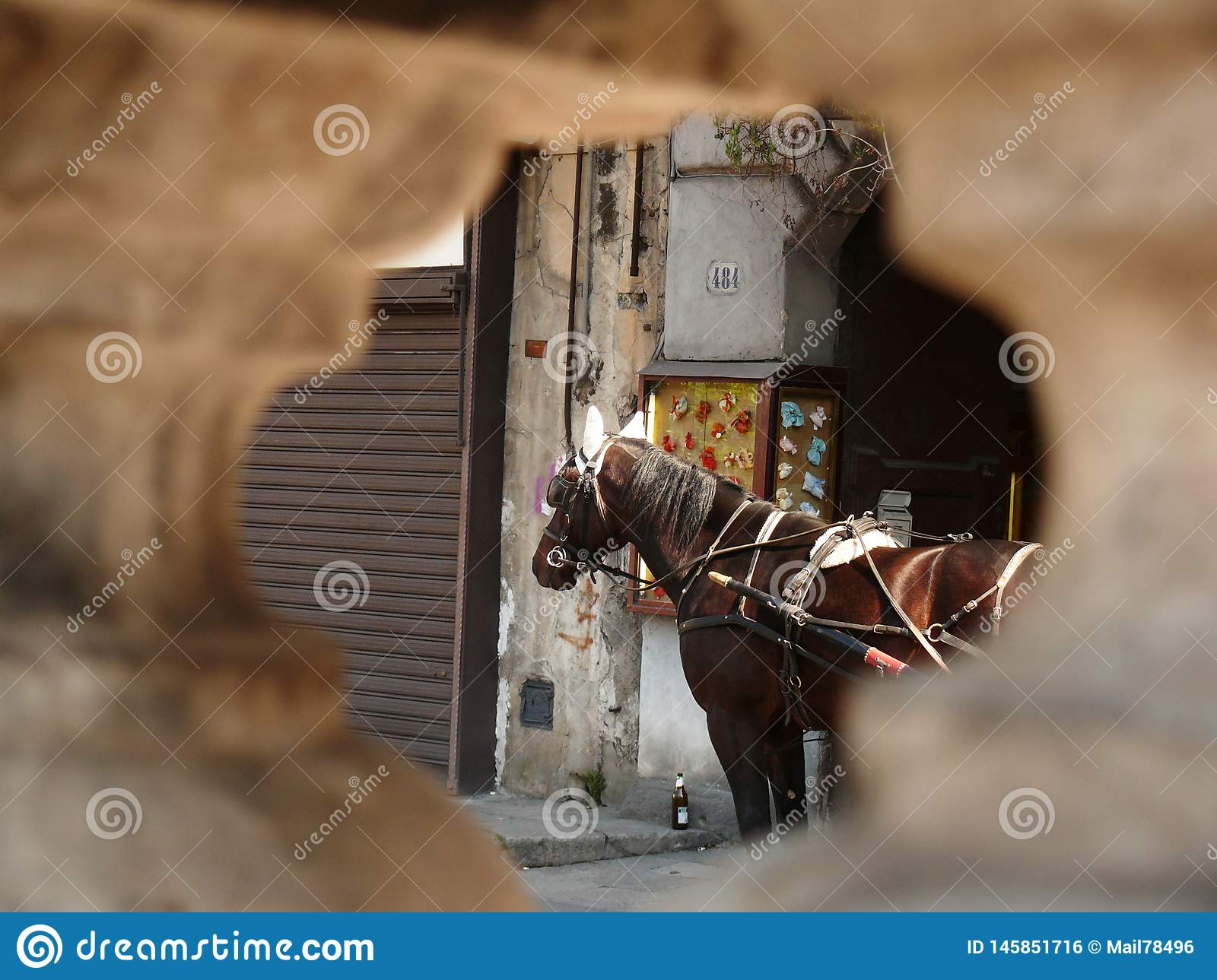 Palermo, Sicily, Italy. Close up of a horse seen from a hole