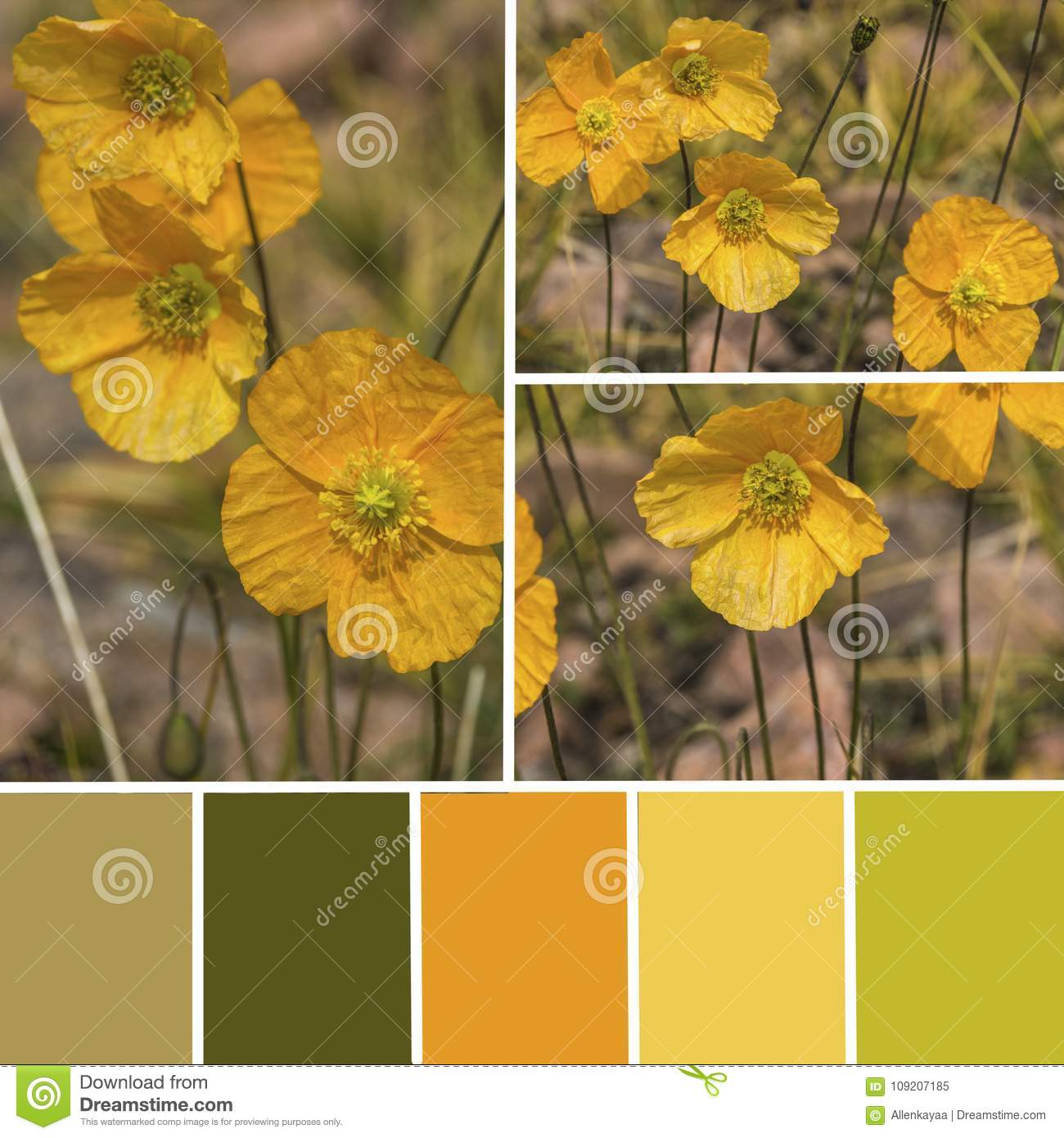 Palette Of Wild Poppy Flowers Color Matching Palette With Yello