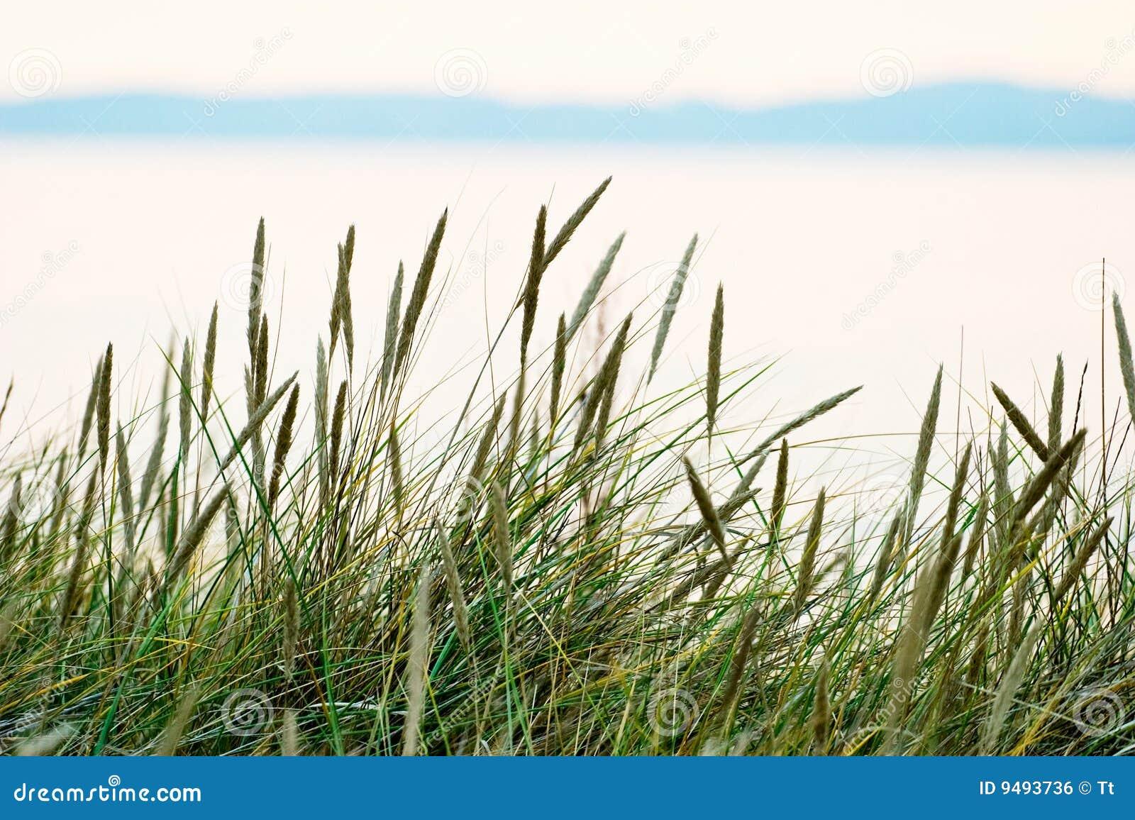Palha da grama