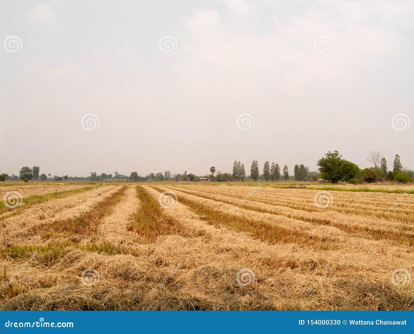 A palha seca no campo com céu