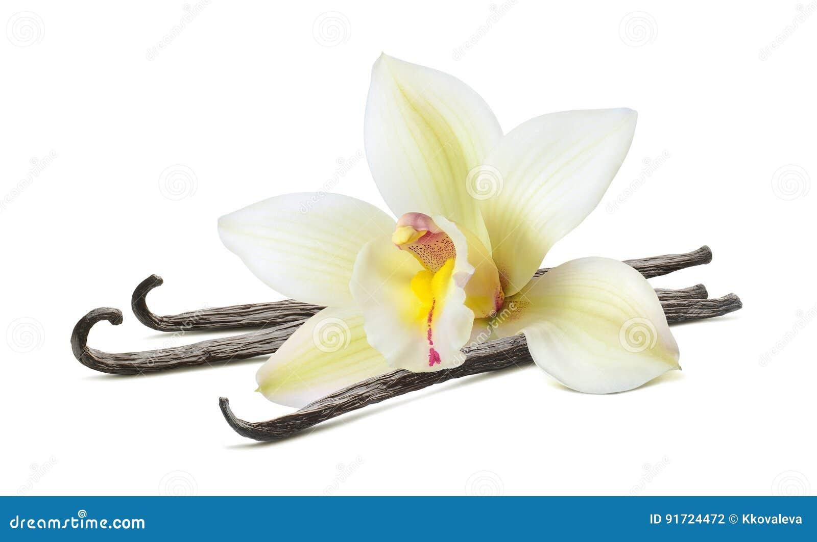Palillo hermoso de la flor de la vainilla aislado en blanco