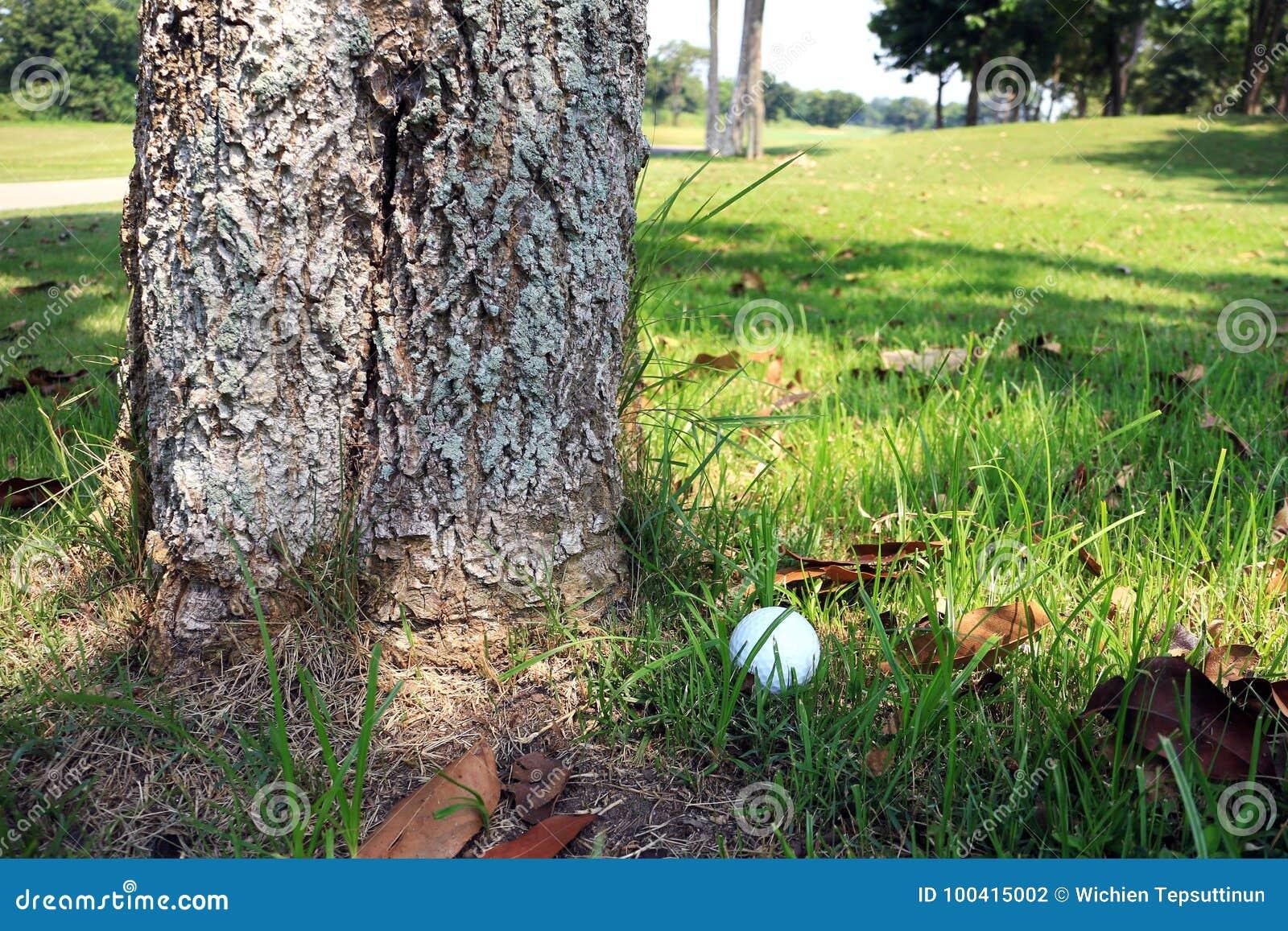 Palla da golf al fondo dell albero
