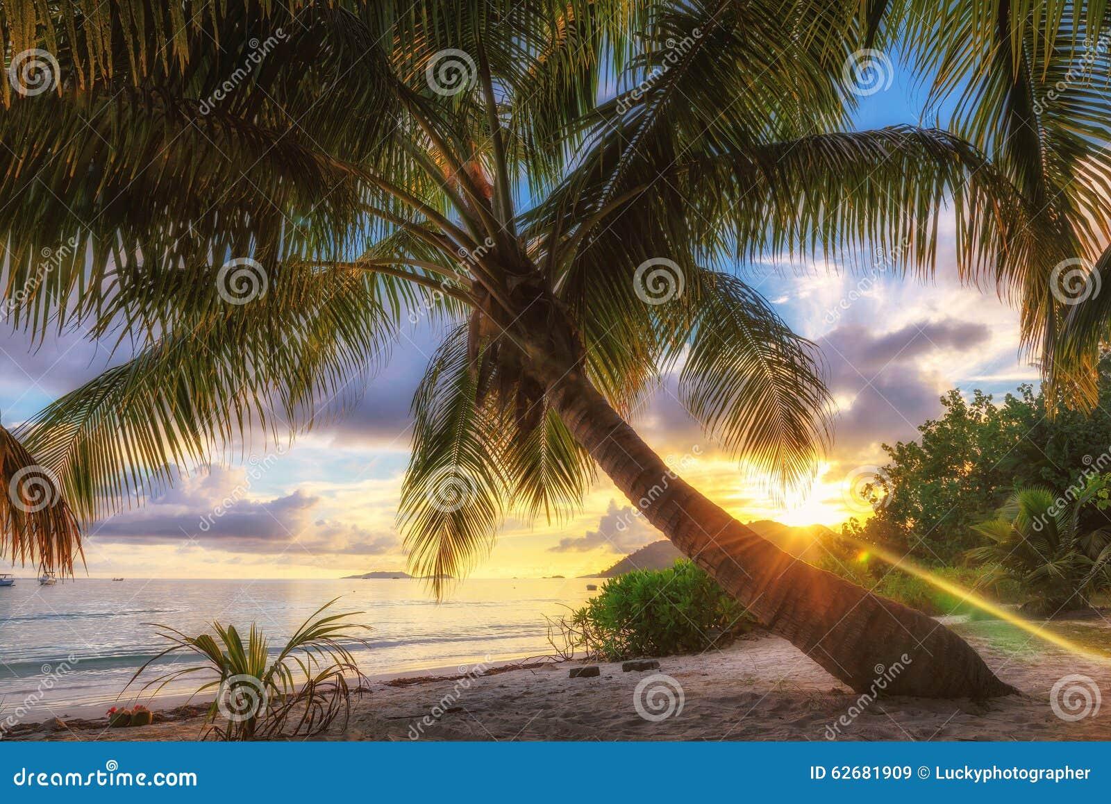 Palm beach at sunrise on Praslin island, Seychelles