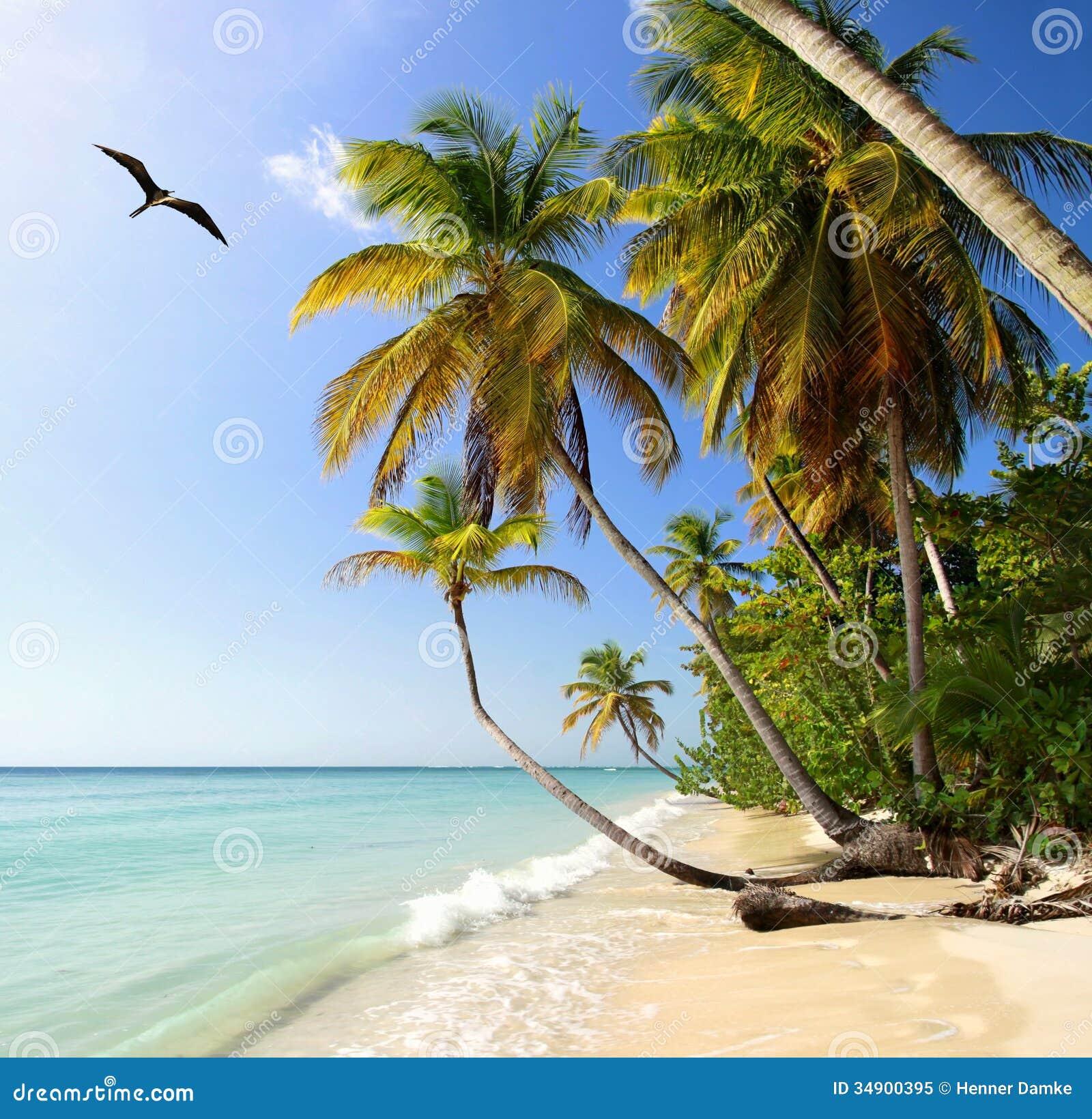 Palm Beach Tobago Royalty Free Stock Photo
