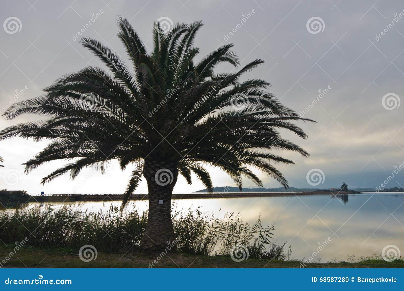 Palm bij zonsondergang op een strand in Nora, Sardinige