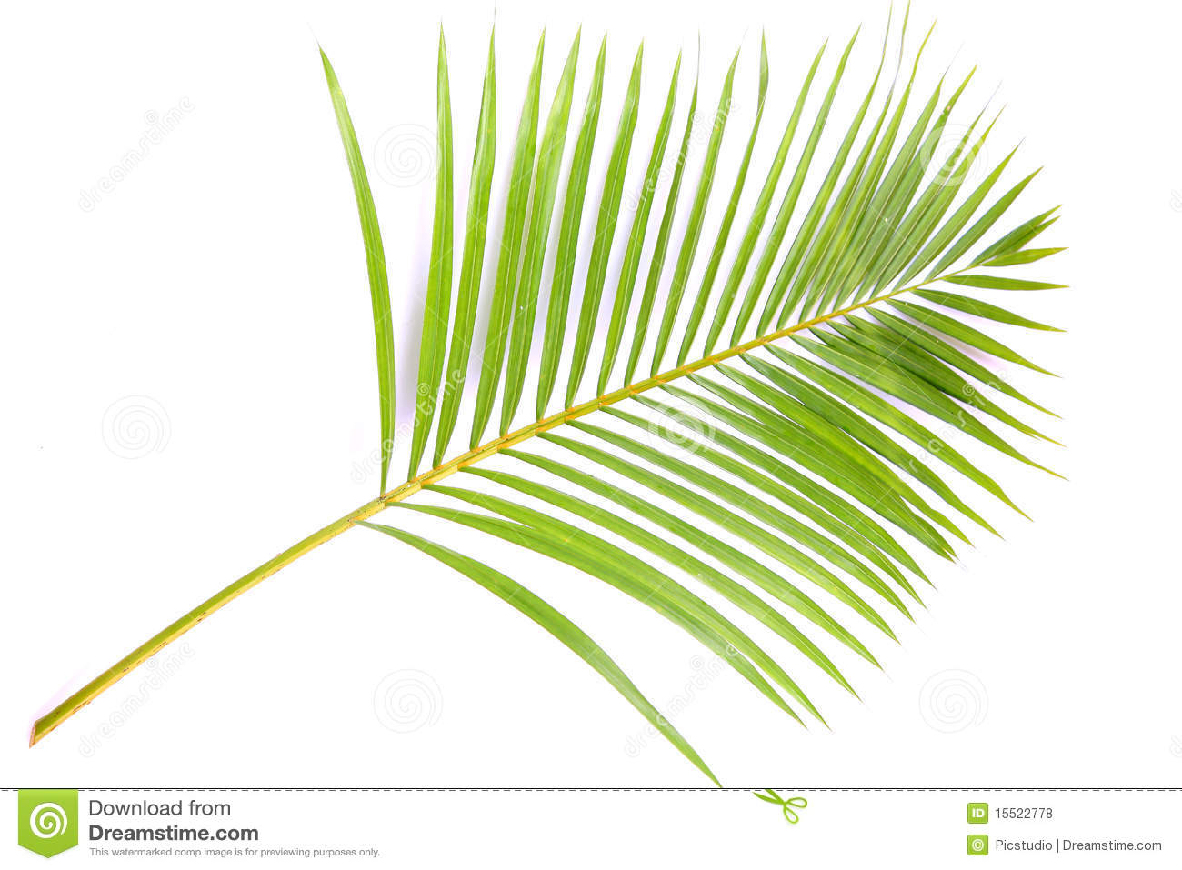 Palm Branch Royalty Free Stock Photos - Image: 15522778
