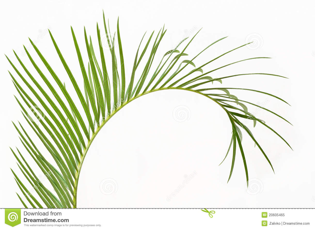 Palm Branch And Cross Clip Art palm branch royalty free stock photo ...