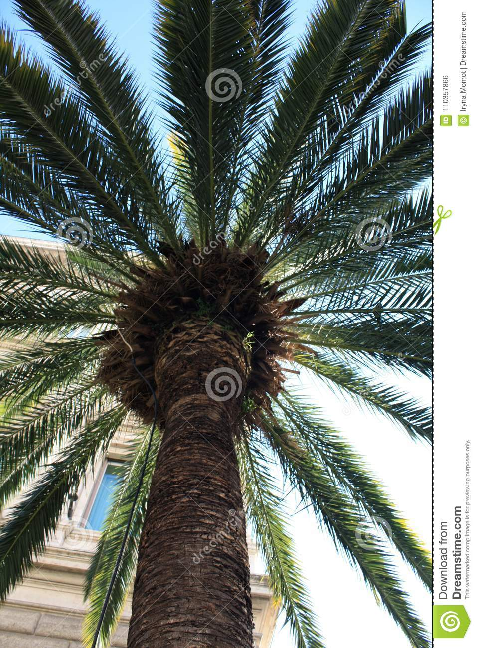 Palm with building. Italy. Rom. Sunny day stock image image of.