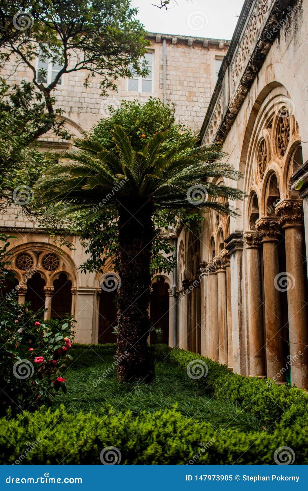 Palm in de tuin van een klooster