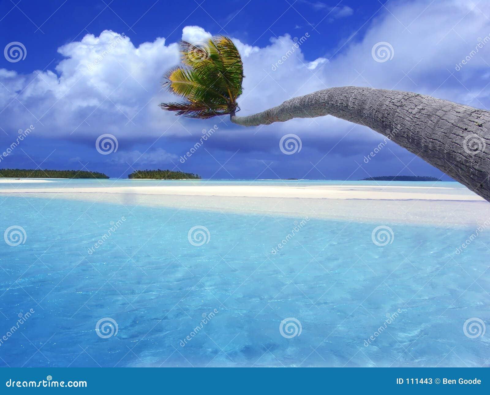 Palm die over lagune buigt
