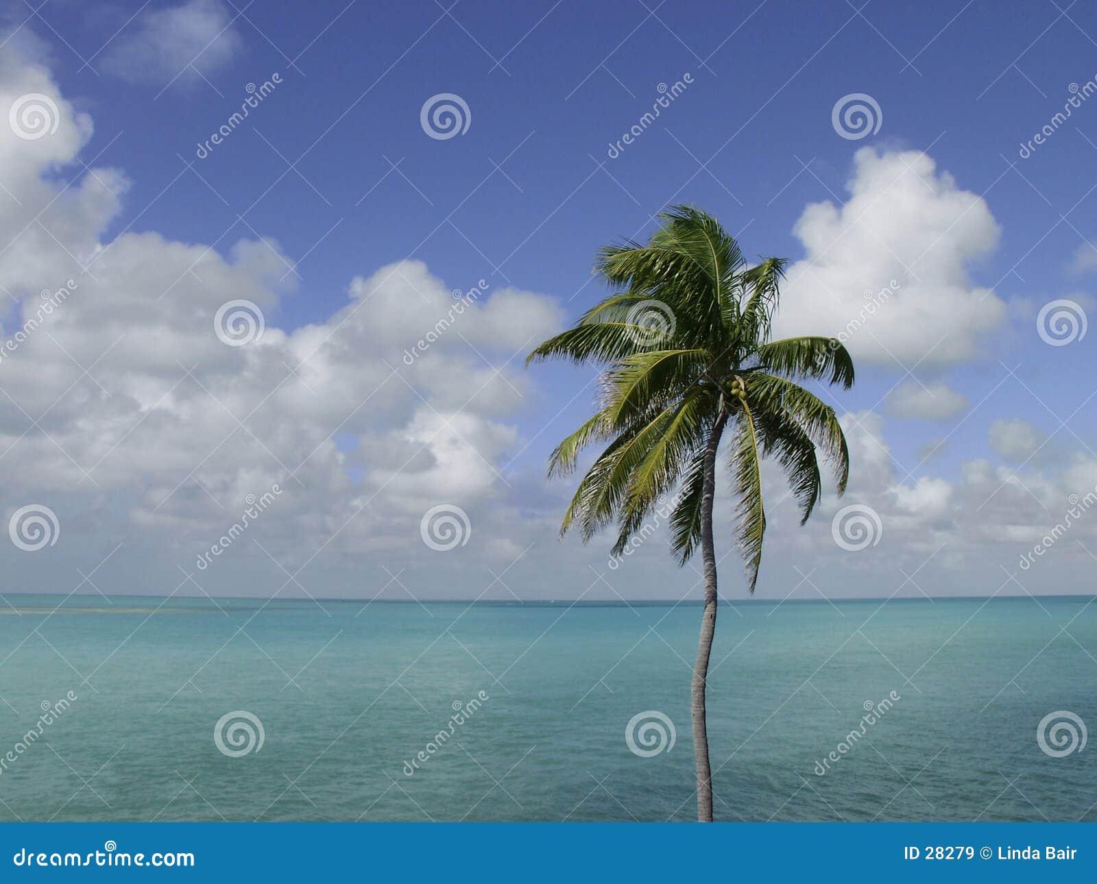Palm drzewo nieba oceanu