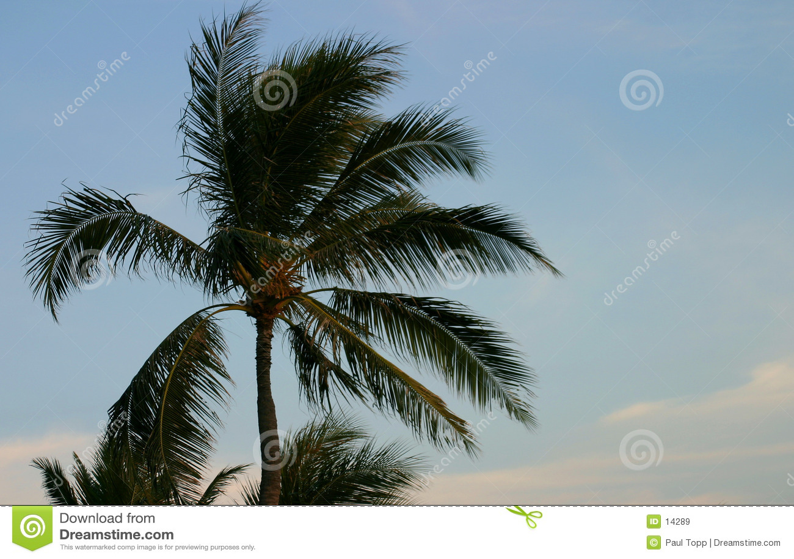 Palm en Blauwe Hemel