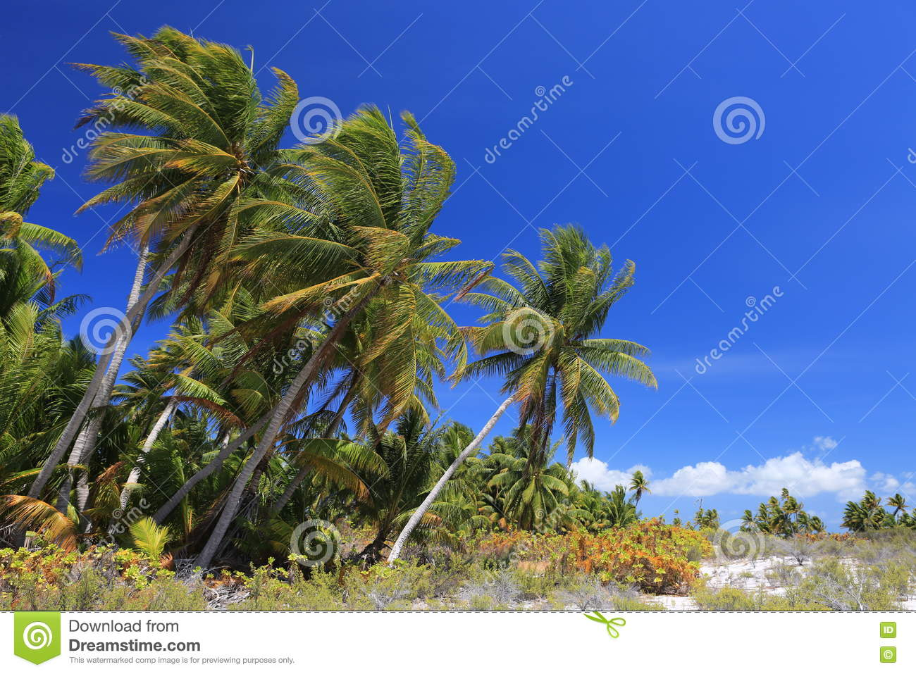 Palm Forest, Christmas Island, Kiribati Stock Image - Image of ...