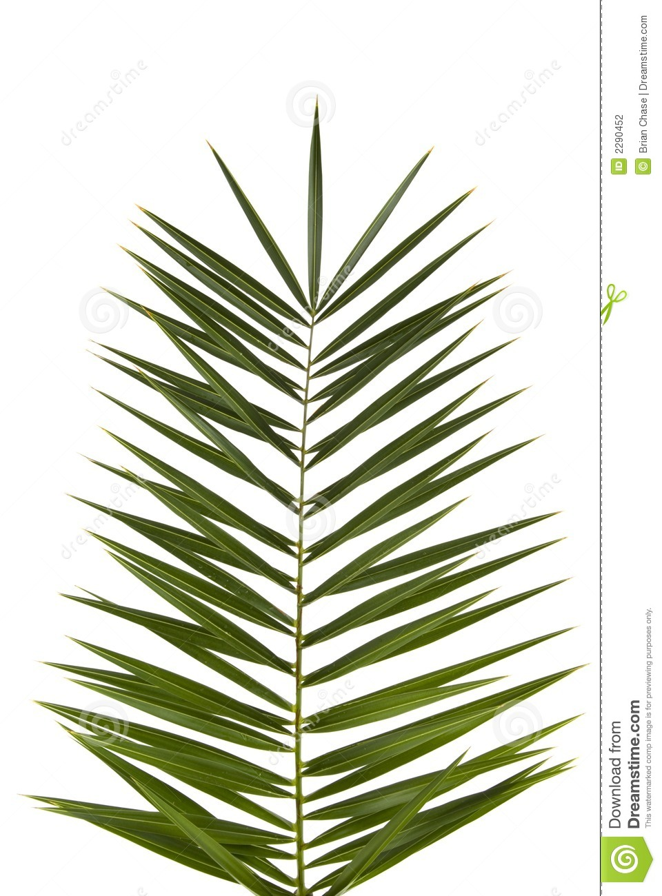 Palm Frond Stock Photography  Image: 2290452