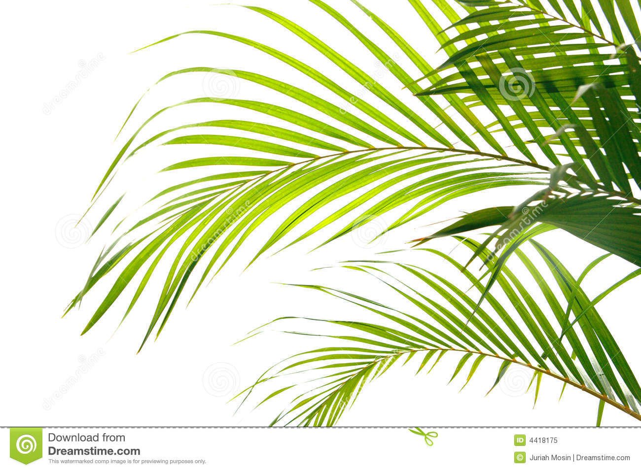 Palm fronds waving in the wind,