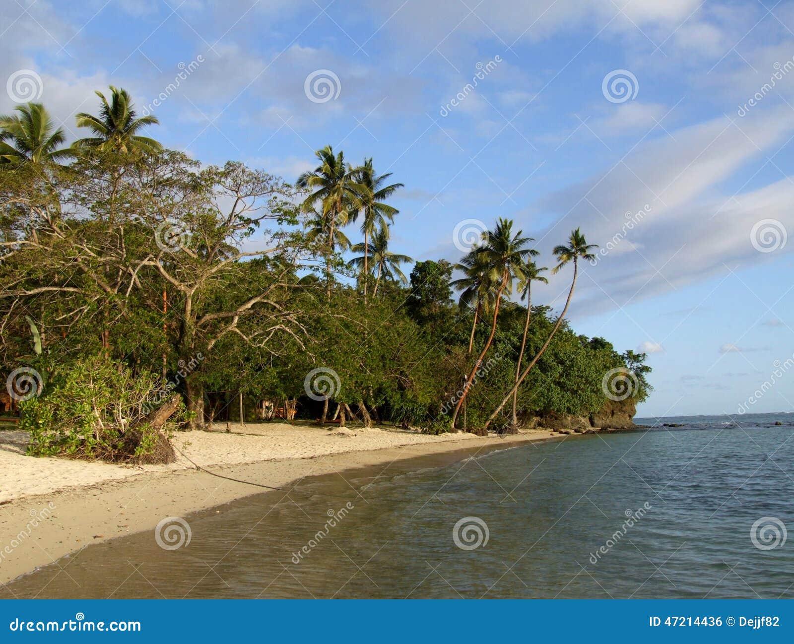 Palm grove on a beach