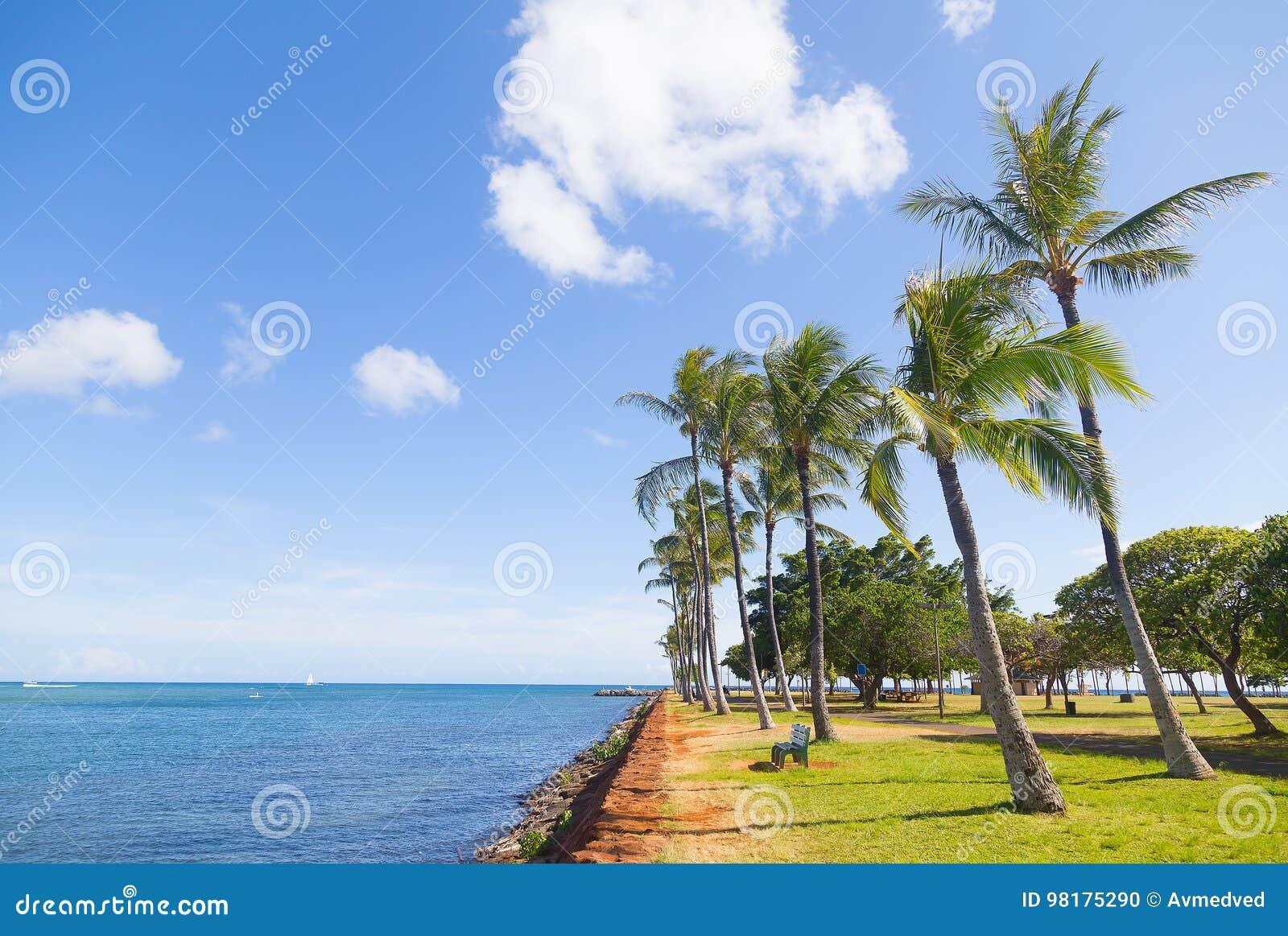 Palm Grove Near Water On The Tropical Island, Hawaii, USA