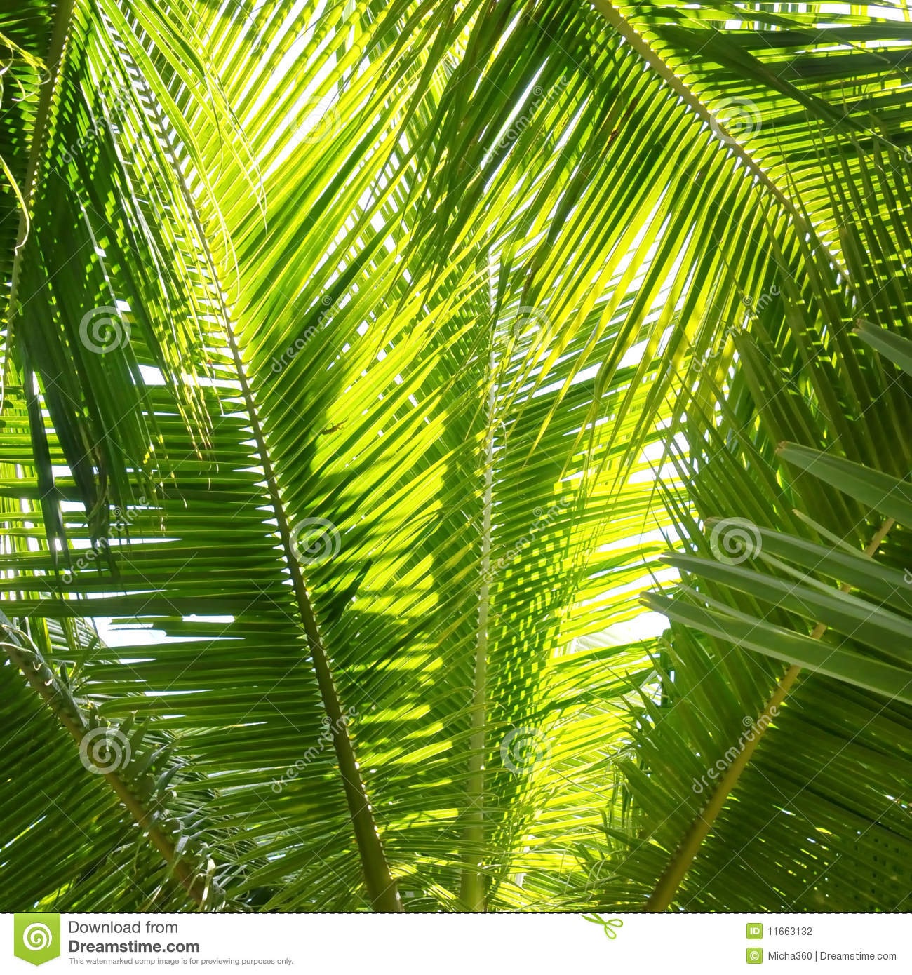 Displaying 14> Images For - Jungle Palm Trees...