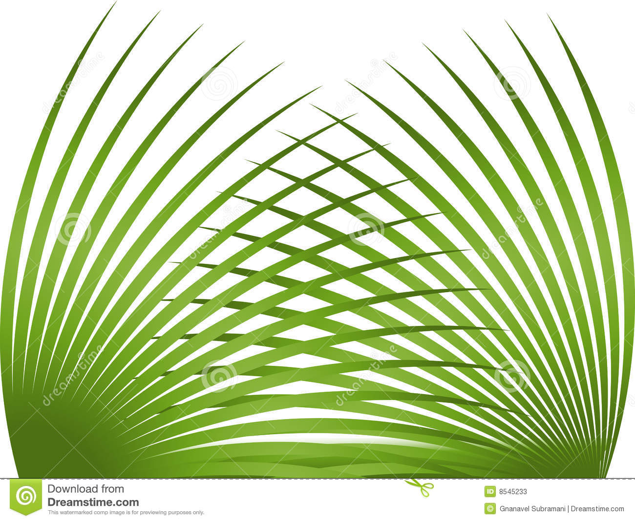 Palm Leaf Stock Photos  Image: 8545233