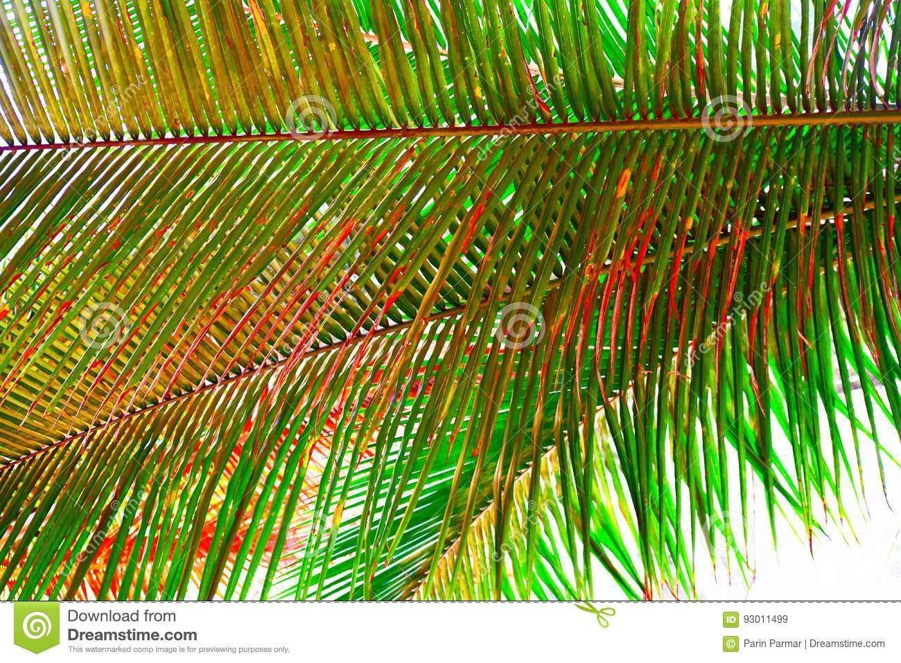 Palm Leaves - Abstract Natural Green Background with Tinge of Red