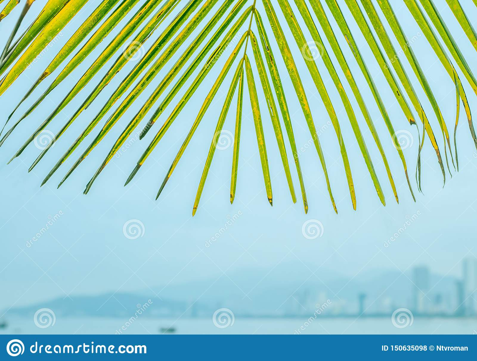 Palm leaves against the background of the city