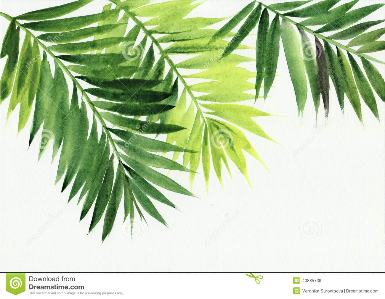 Palm leaves isolated on white background. Original watercolor painting