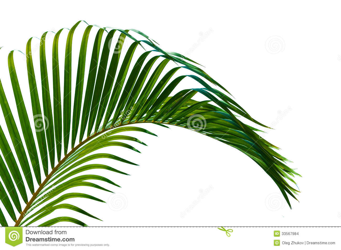 Palm leaves close up isolated on white background.