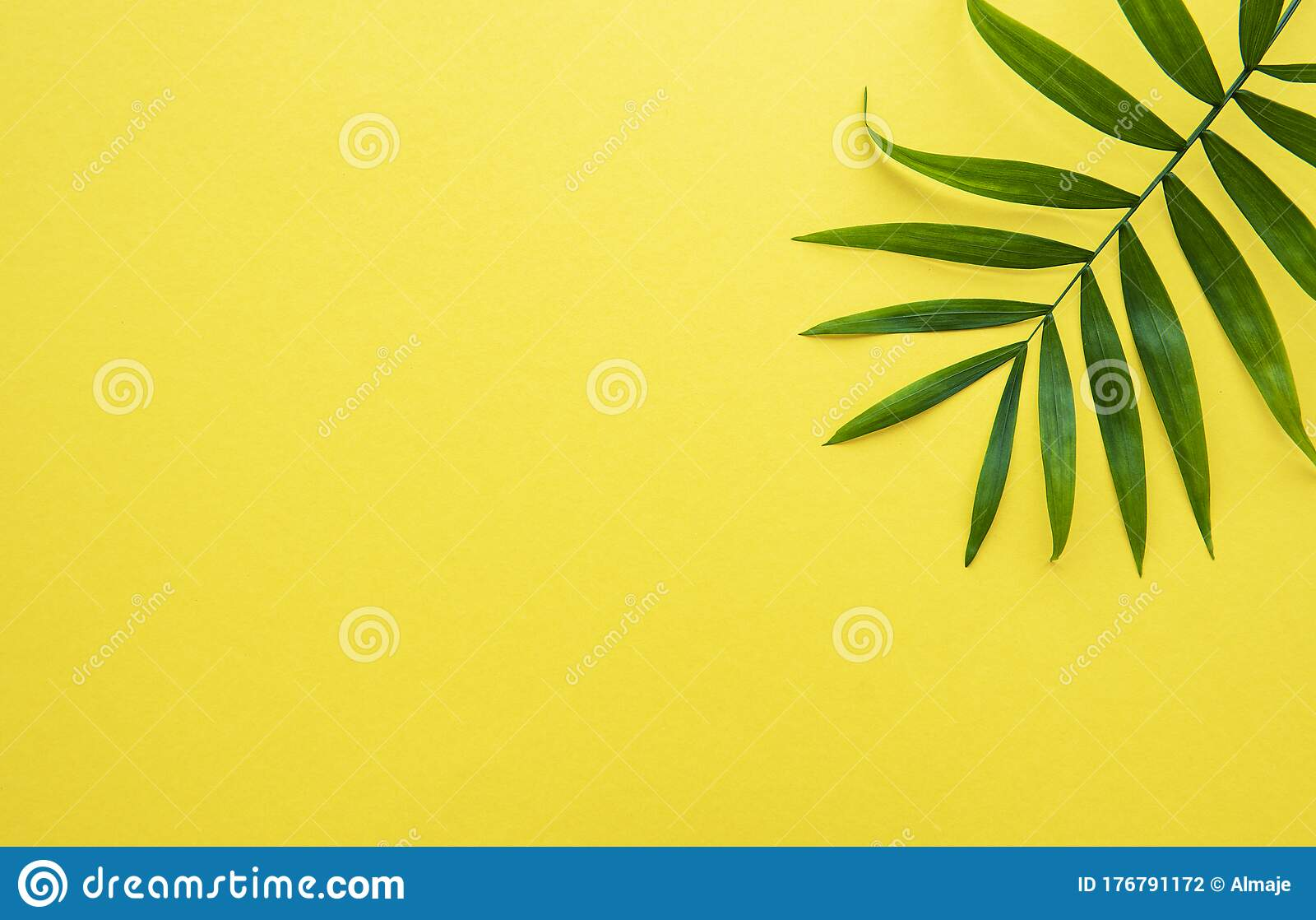 Palm Leaves On Yellow Background Stock Photo Image Of Frame Minimal 176791172 Share yellow background with your friends. palm leaves on yellow background stock photo image of frame minimal 176791172